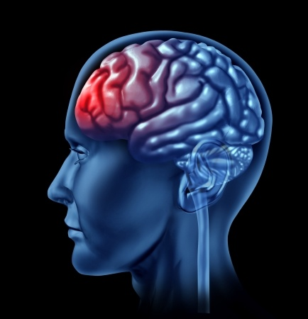 frontal-lobes